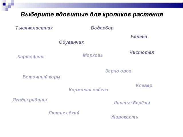 Выберите ядовитые для кроликов растения Тысячелистник Водосбор Одуванчик Беле...