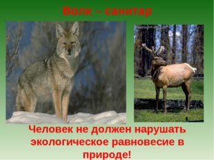Волк – санитар Человек не должен нарушать экологическое равновесие в природе!