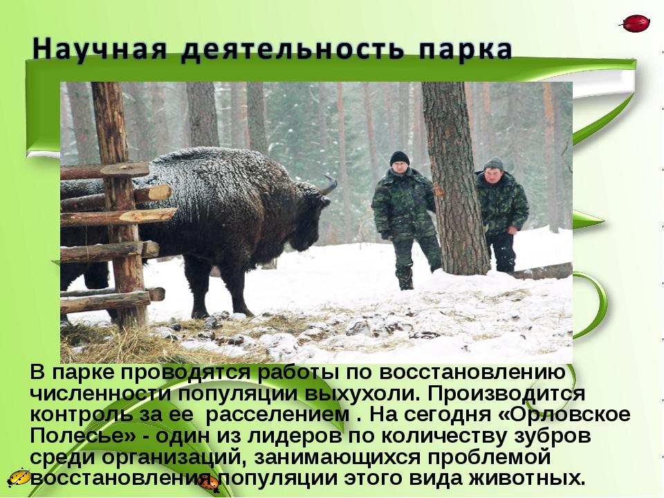 В парке проводятся работы по восстановлению численности популяции выхухоли. П...