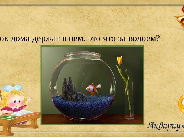 Аквариум Рыбок дома держат в нем, это что за водоем?