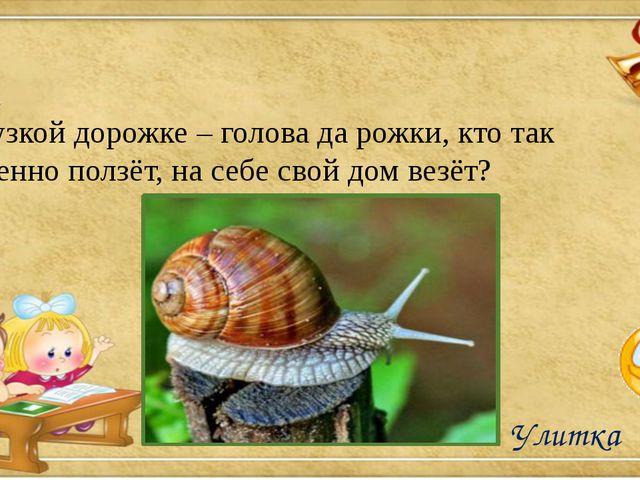 На узкой дорожке – голова да рожки, кто так медленно ползёт, на себе свой до...