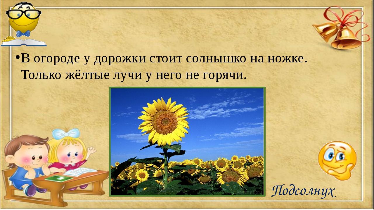 В огороде у дорожки стоит солнышко на ножке. Только жёлтые лучи у него не гор...
