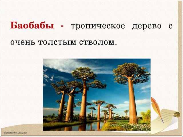 Баобабы - тропическое дерево с очень толстым стволом.