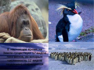 В настоящее время на Земле существует 17 видов пингвинов, из которых численно