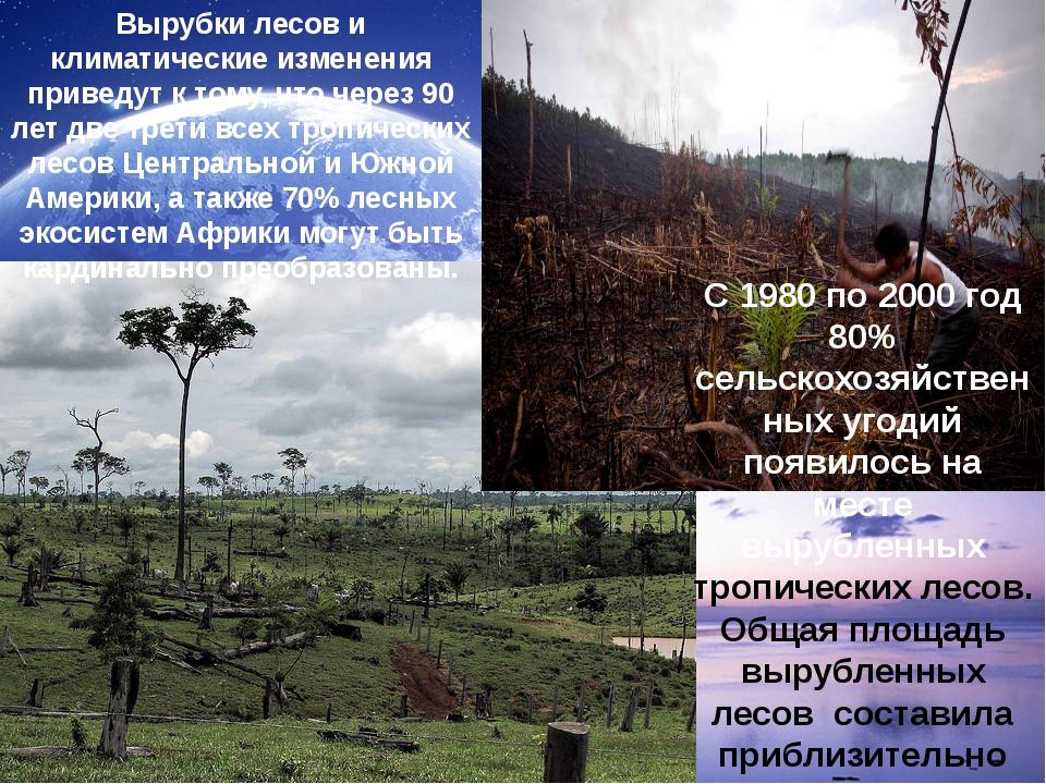 Вырубки лесов и климатические изменения приведут к тому, что через 90 лет две...