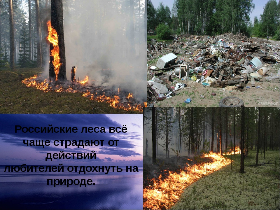 Российские леса всё чаще страдают от действий любителей отдохнуть на природе.