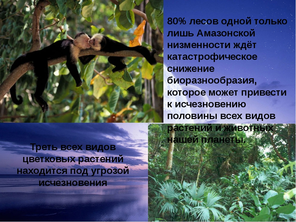 80% лесов одной только лишь Амазонской низменности ждёт катастрофическое сниж...