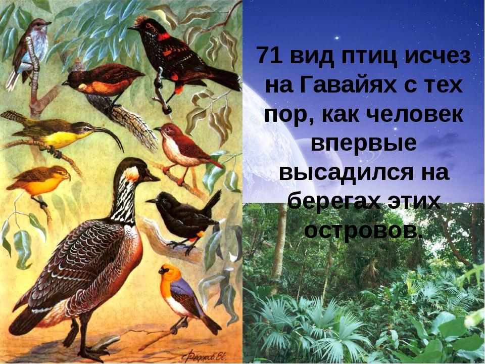 71 вид птиц исчез на Гавайях с тех пор, как человек впервые высадился на бере...