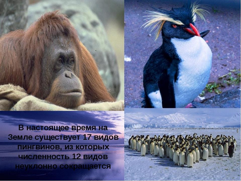 В настоящее время на Земле существует 17 видов пингвинов, из которых численно...