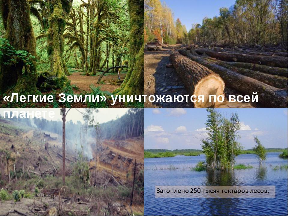 «Легкие Земли» уничтожаются по всей планете