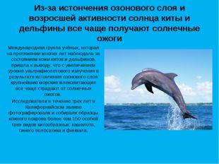 Из-за истончения озонового слоя и возросшей активности солнца киты и дельфины