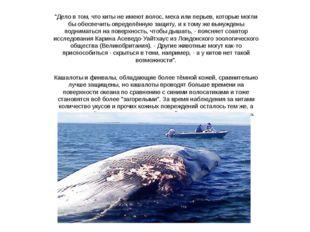 """""""Дело в том, что киты не имеют волос, меха или перьев, которые могли бы обесп"""