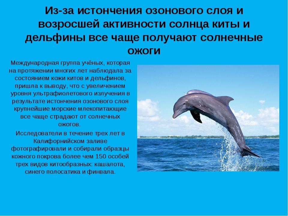 Из-за истончения озонового слоя и возросшей активности солнца киты и дельфины...