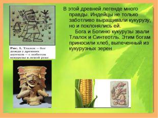 В этой древней легенде много правды. Индейцы не только заботливо выращивали к