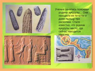 Ученые занялись поисками родины кукурузы… Они находили ее початки и даже пыль