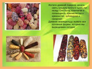 Жители древней Америки начали сеять кукурузу почти 6 тысяч лет назад! Она был