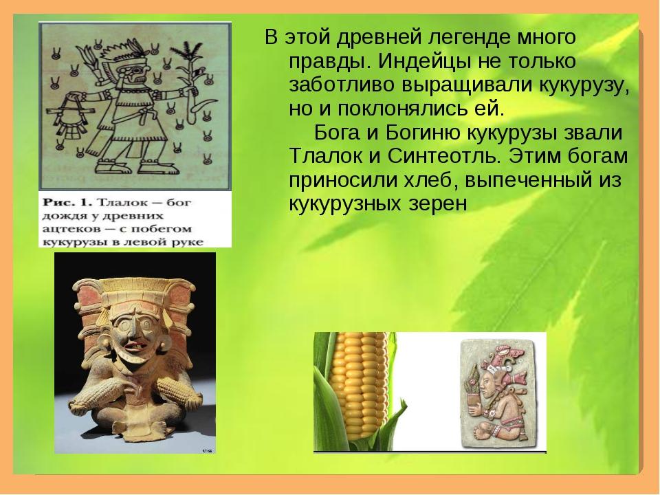 В этой древней легенде много правды. Индейцы не только заботливо выращивали к...