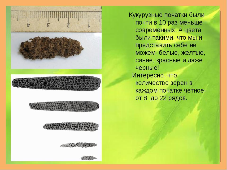 Кукурузные початки были почти в 10 раз меньше современных. А цвета были таки...
