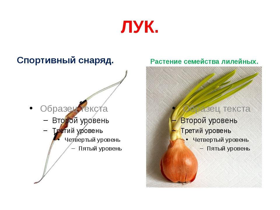 ЛУК. Спортивный снаряд. Растение семейства лилейных.