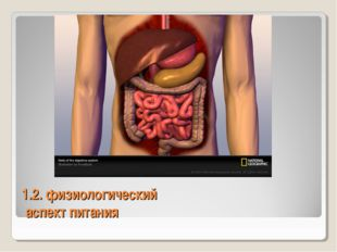 1.2. физиологический аспект питания