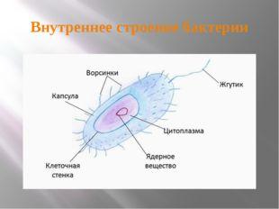 Внутреннее строение бактерии