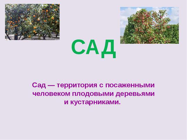 САД Сад— территория с посаженными человеком плодовыми деревьями икустарника...