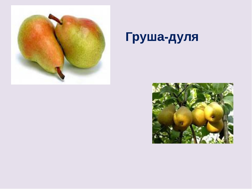 ПИСЬМА ФРАНЦИСКАНЦА