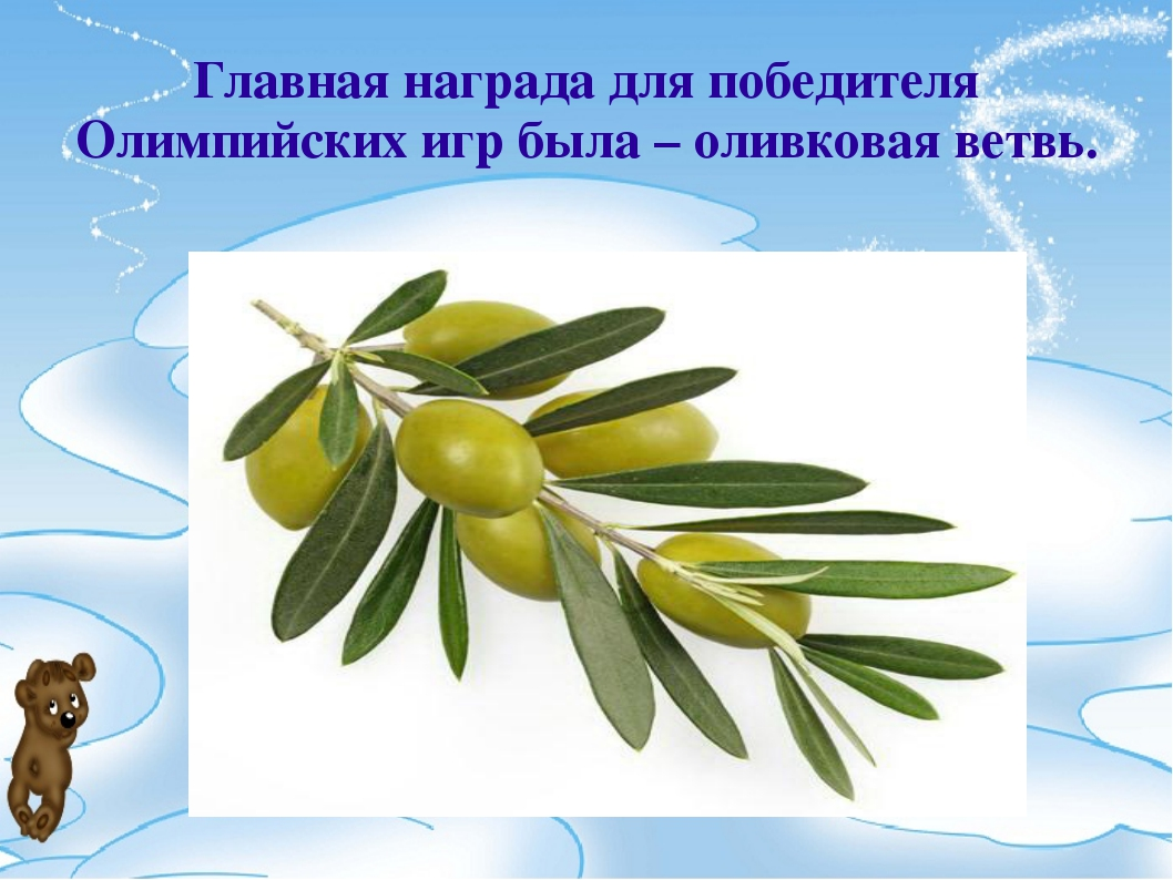 Главная награда для победителя Олимпийских игр была – оливковая ветвь.