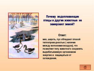 Почему водоплавающие птицы и другие животные не замерзают зимой? мех, шерсть,