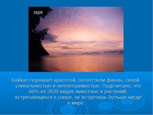 Байкал поражает красотой, богатством фауны, своей уникальностью и неповторимо