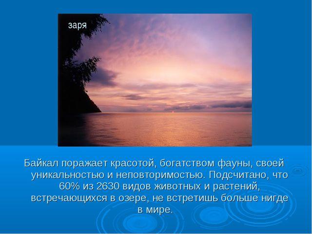 Байкал поражает красотой, богатством фауны, своей уникальностью и неповторимо...