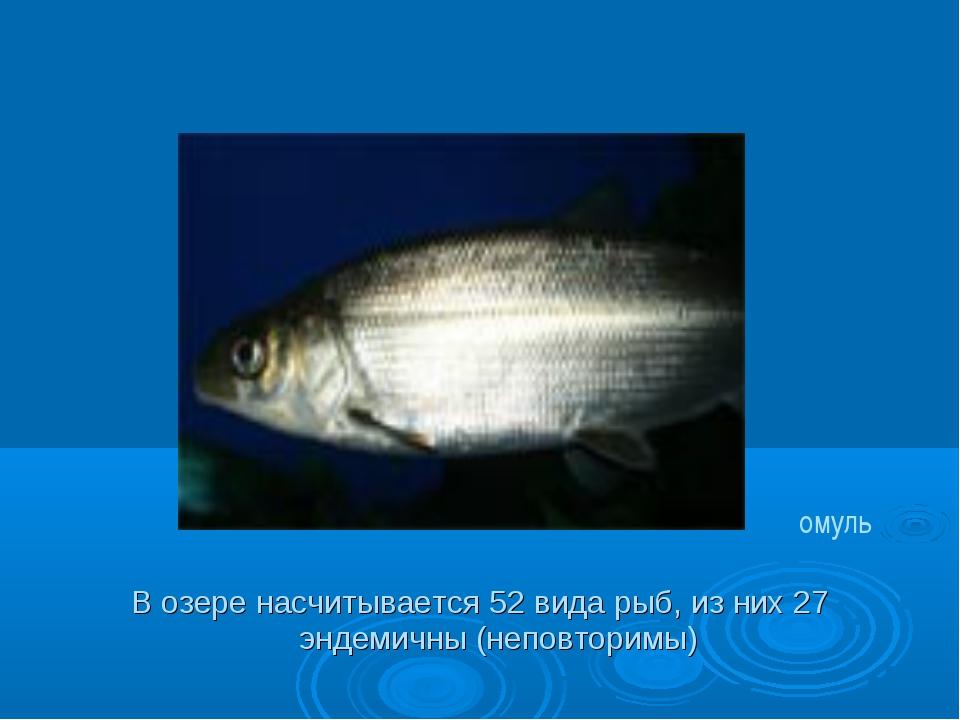 В озере насчитывается 52 вида рыб, из них 27 эндемичны (неповторимы) омуль
