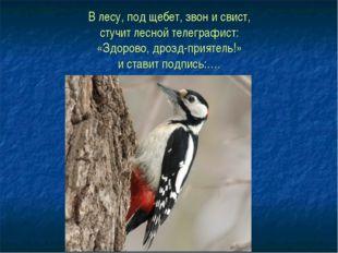 В лесу, под щебет, звон и свист, стучит лесной телеграфист: «Здорово, дрозд-п