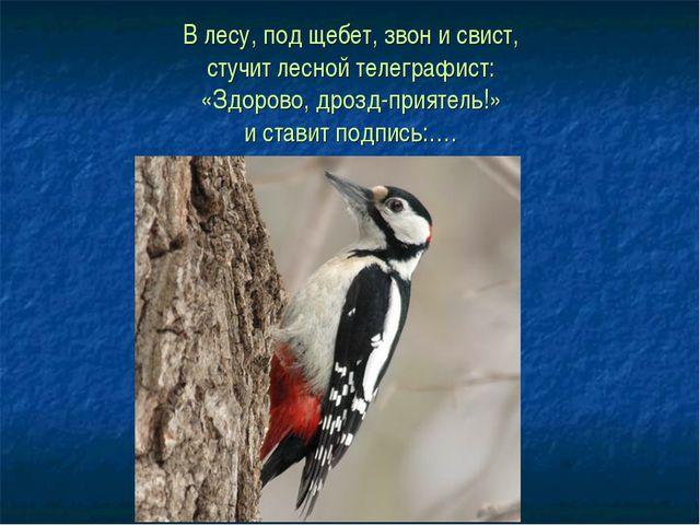 В лесу, под щебет, звон и свист, стучит лесной телеграфист: «Здорово, дрозд-п...