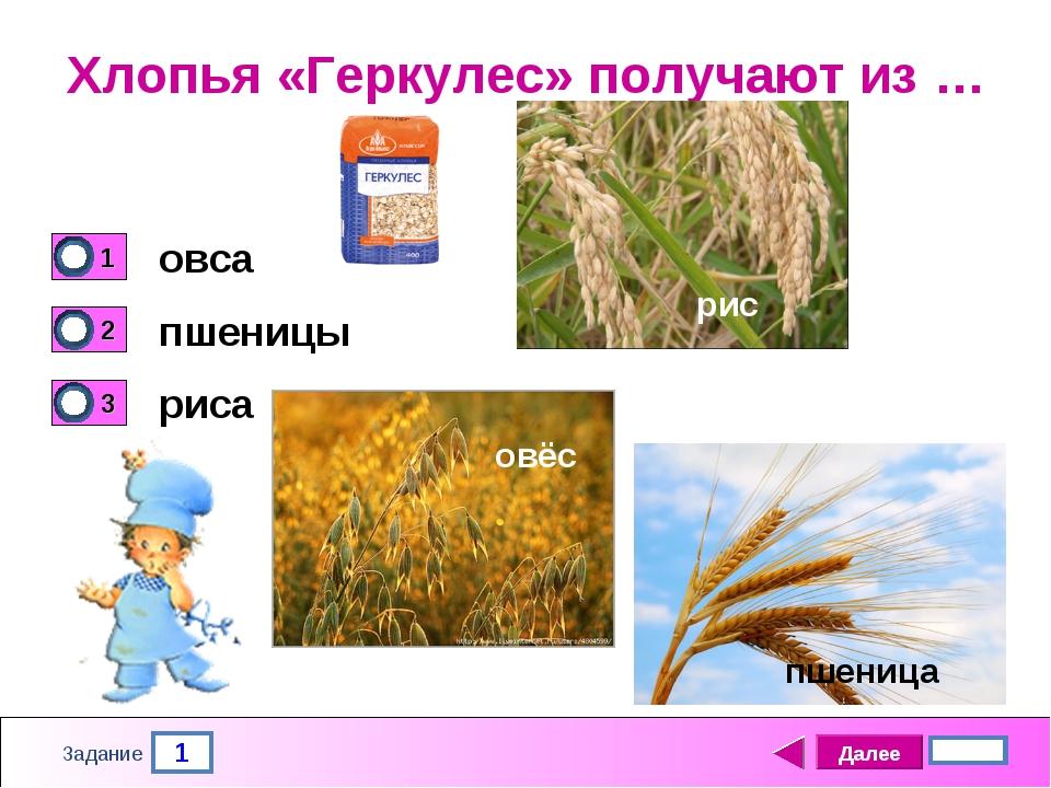 1 Задание Хлопья «Геркулес» получают из … овса пшеницы риса Далее 4 бал. пшен...