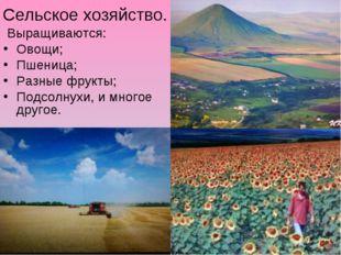 Сельское хозяйство. Выращиваются: Овощи; Пшеница; Разные фрукты; Подсолнухи,