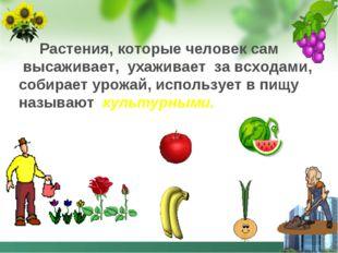 Растения, которые человек сам высаживает, ухаживает за всходами, собирает ур