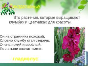 Декоративные Это растения, которые выращивают клумбах и цветниках для красоты