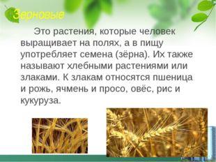 Зерновые Это растения, которые человек выращивает на полях, а в пищу употребл