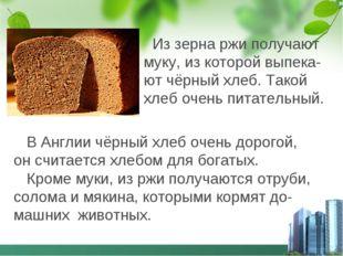 Из зерна ржи получают муку, из которой выпека- ют чёрный хлеб. Такой хлеб оч