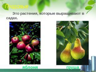 Плодовые Это растения, которые выращивают в садах. яблоня груша