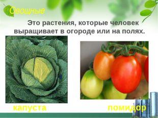 Овощные Это растения, которые человек выращивает в огороде или на полях. капу