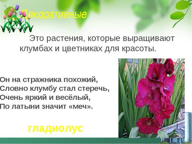 Декоративные Это растения, которые выращивают клумбах и цветниках для красоты...