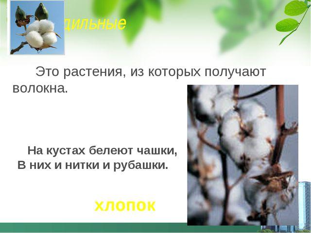 Прядильные Это растения, из которых получают волокна. На кустах белеют чашки,...