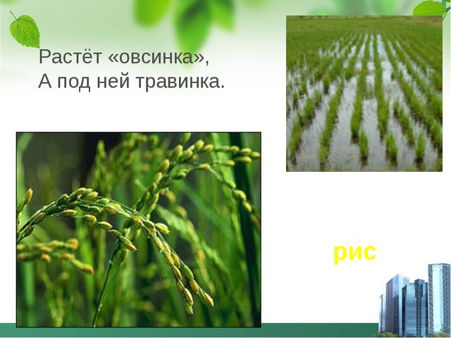 Растёт «овсинка», А под ней травинка. рис