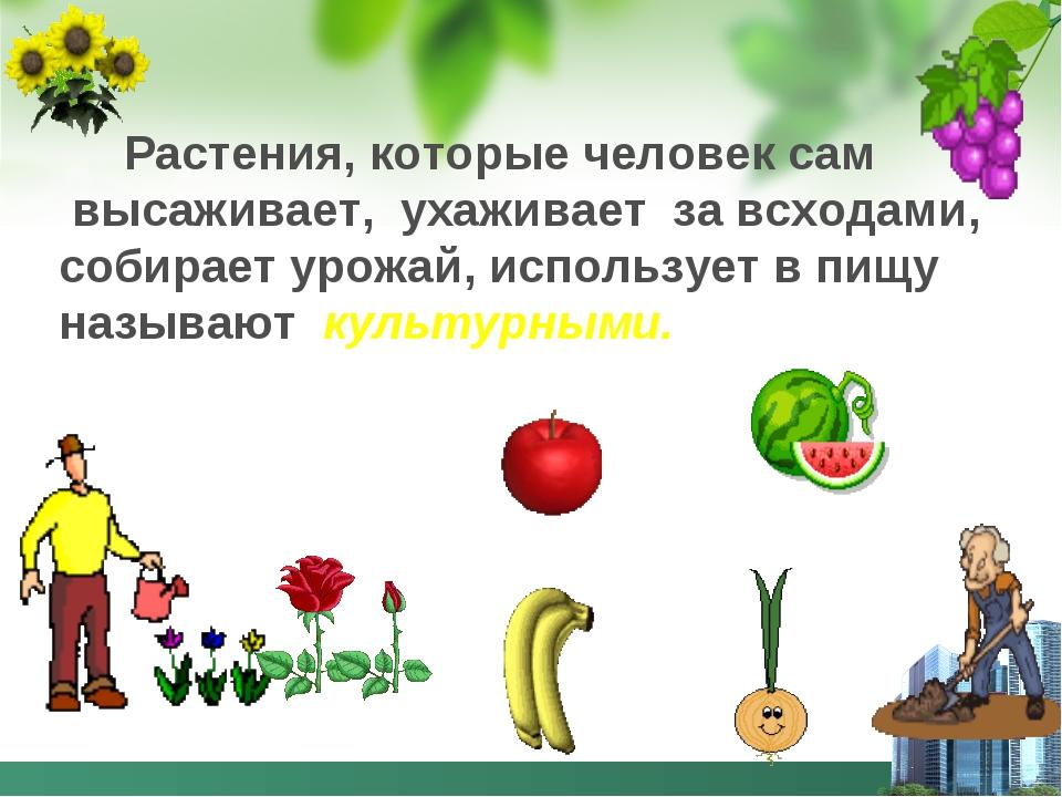 Растения, которые человек сам высаживает, ухаживает за всходами, собирает ур...