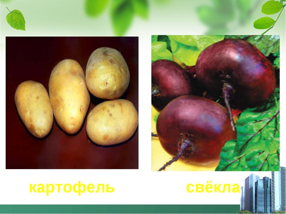 картофель свёкла