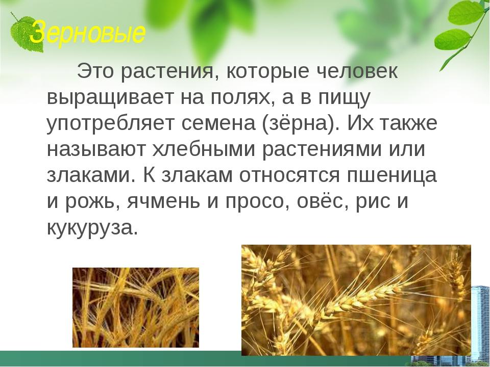 Зерновые Это растения, которые человек выращивает на полях, а в пищу употребл...