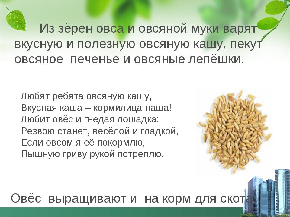 Из зёрен овса и овсяной муки варят вкусную и полезную овсяную кашу, пекут ов...