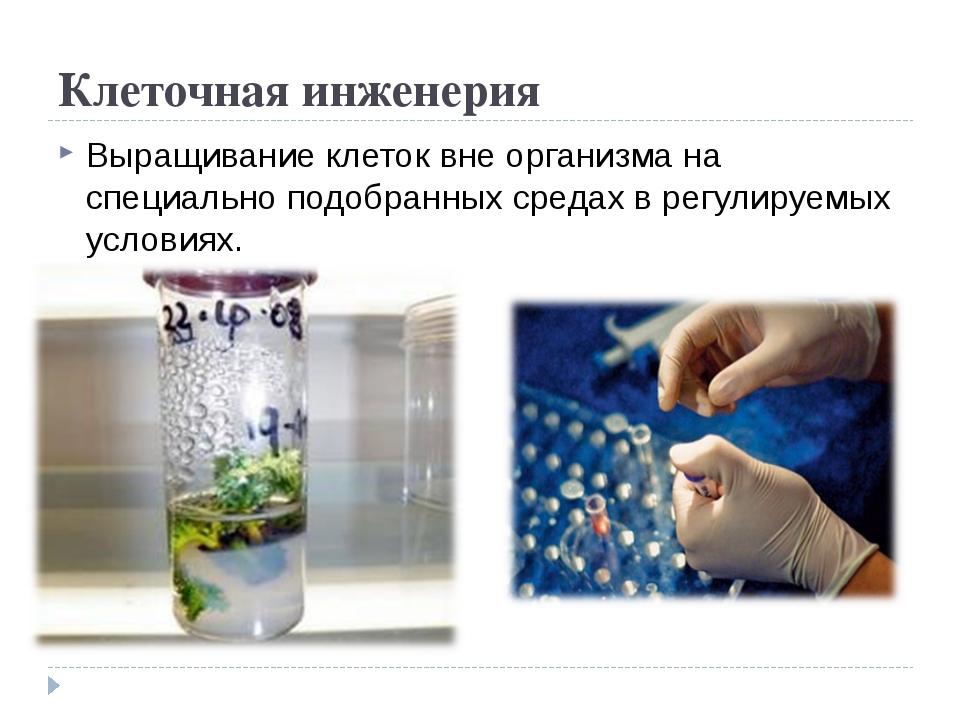Клеточная инженерия Выращивание клеток вне организма на специально подобранны...